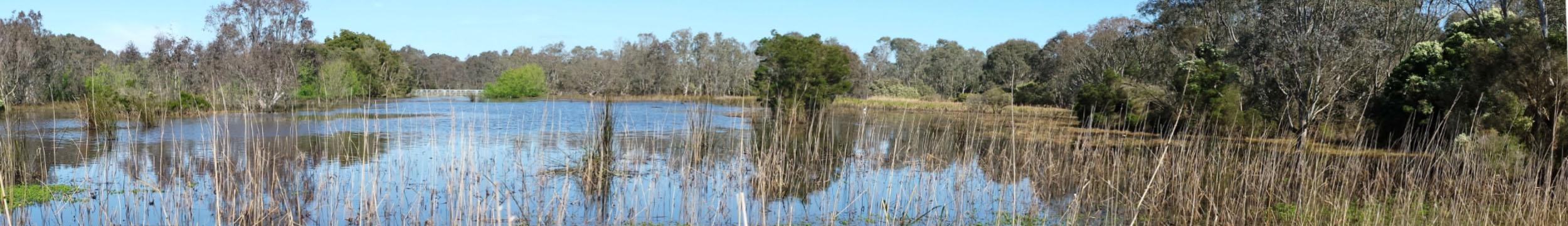 sale-wetlands-header