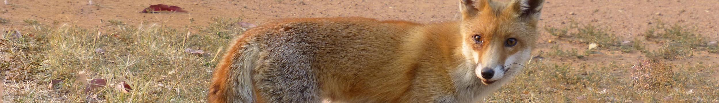 Header-Fox-JohnGreen