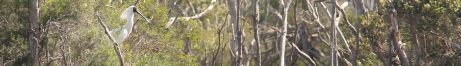 Header-Spoonbill