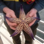 Northern Pacific Seastar