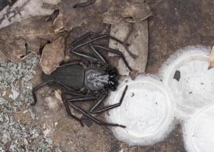 MV John Broomfield spider 1