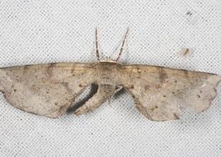 MV Marilyn Hewish moth 13