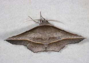 MV Marilyn Hewish moth 5