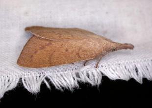 MV Peter Marriott moth 7