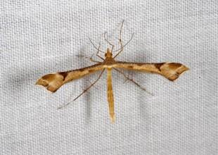 MV Wendy Moore moth 1
