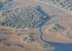 fringing_wetlands