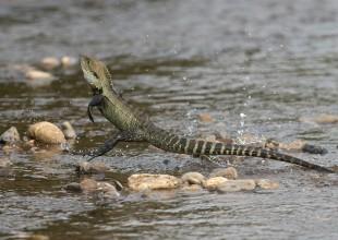 MV David Paul water dragon Avon River